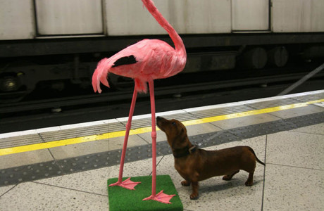 Flingo - from the Adventures of a Flamingo in London