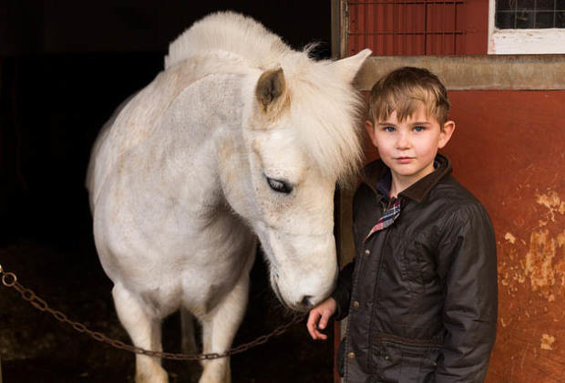 Felix, horse, portrait, stable,