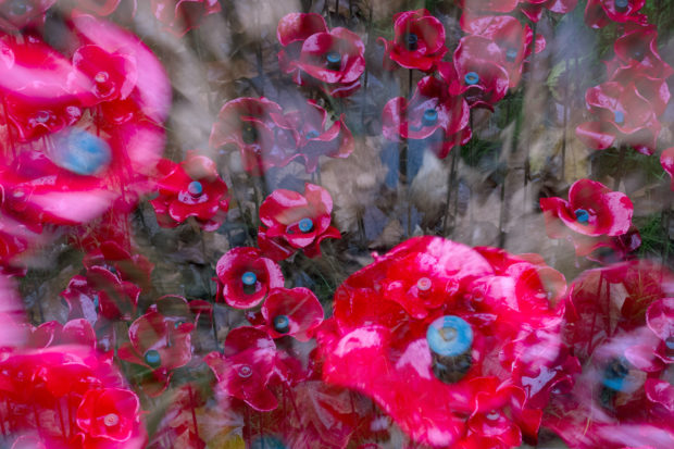 Ceramic Poppies at the Tower of London by artists Paul Cummins and Tom Piper. Photographed by Tracy Howl 17 Nov 2014.